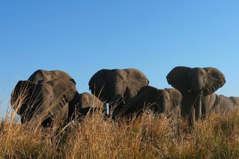 Photo voyage Botswana 3