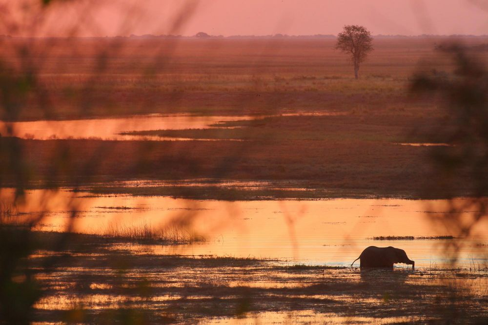 Photo voyage Botswana 8