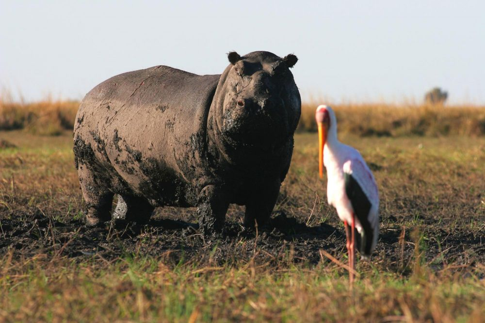 Photo voyage Botswana 9