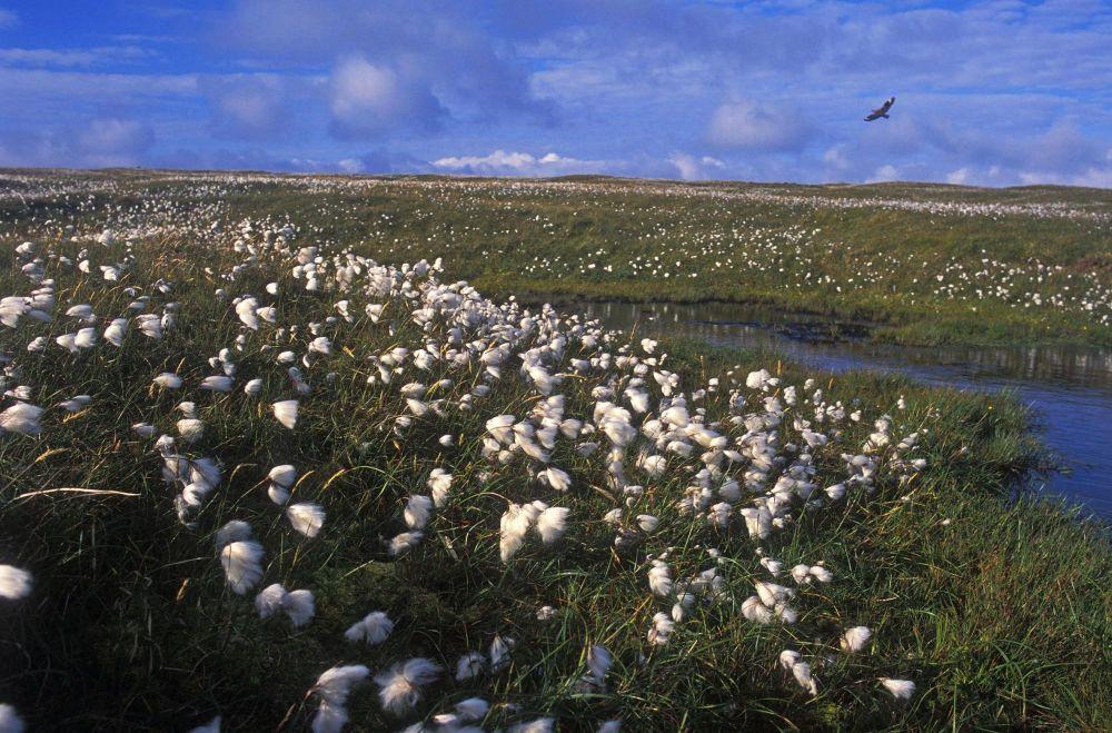 Champ de fleurs îles Shetland Ecosse