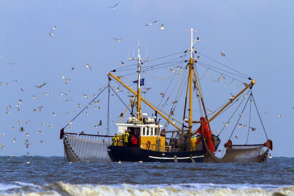 Bateau crevettier île Texel Pays-Bas