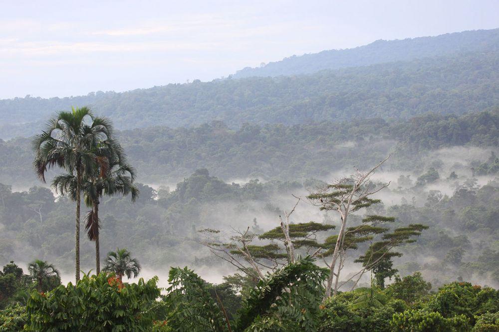 Forêt de Nimbokrang © Mehd Halaouate