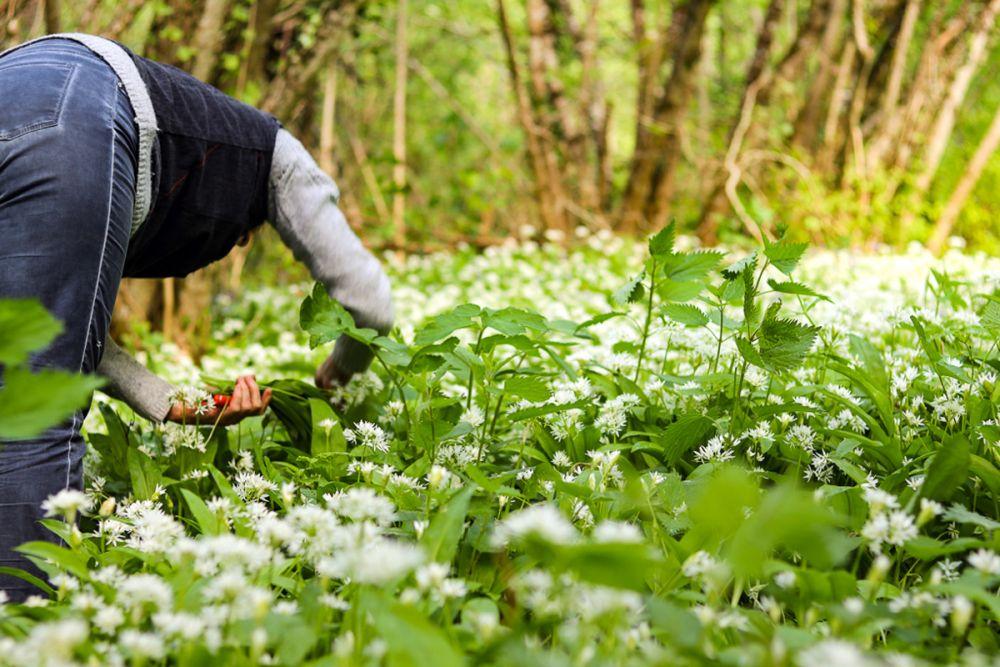 Cueillette de plantes © Emilie Boillot