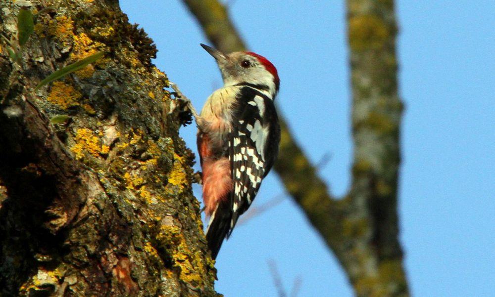 sejour-nature-scarpe-escaut-observation-oiseaux-pic-mar-©giuss_95.jpg