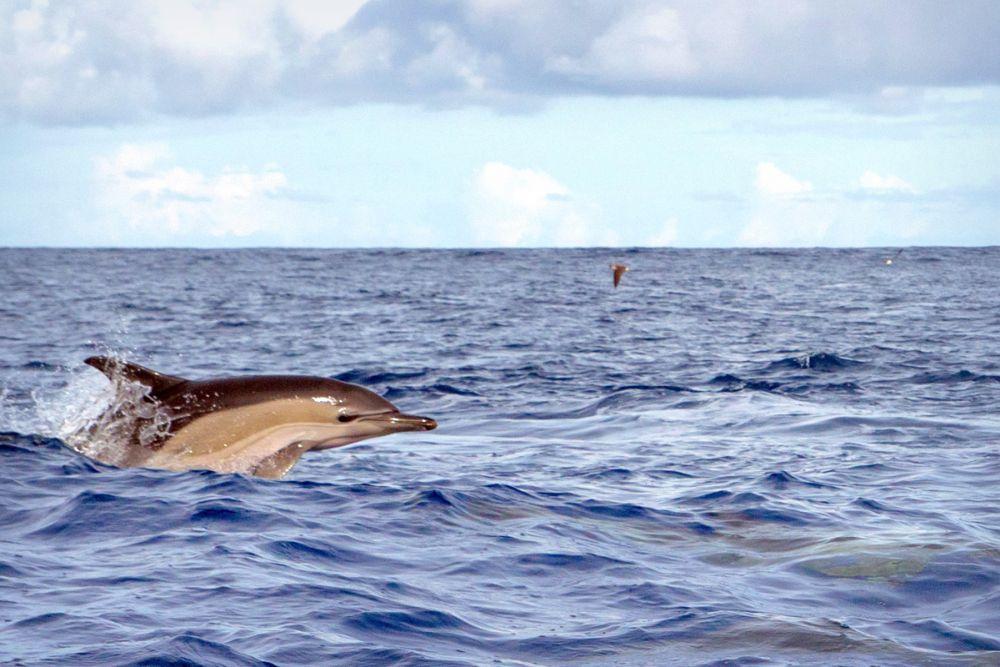 Photo voyage Açores 2