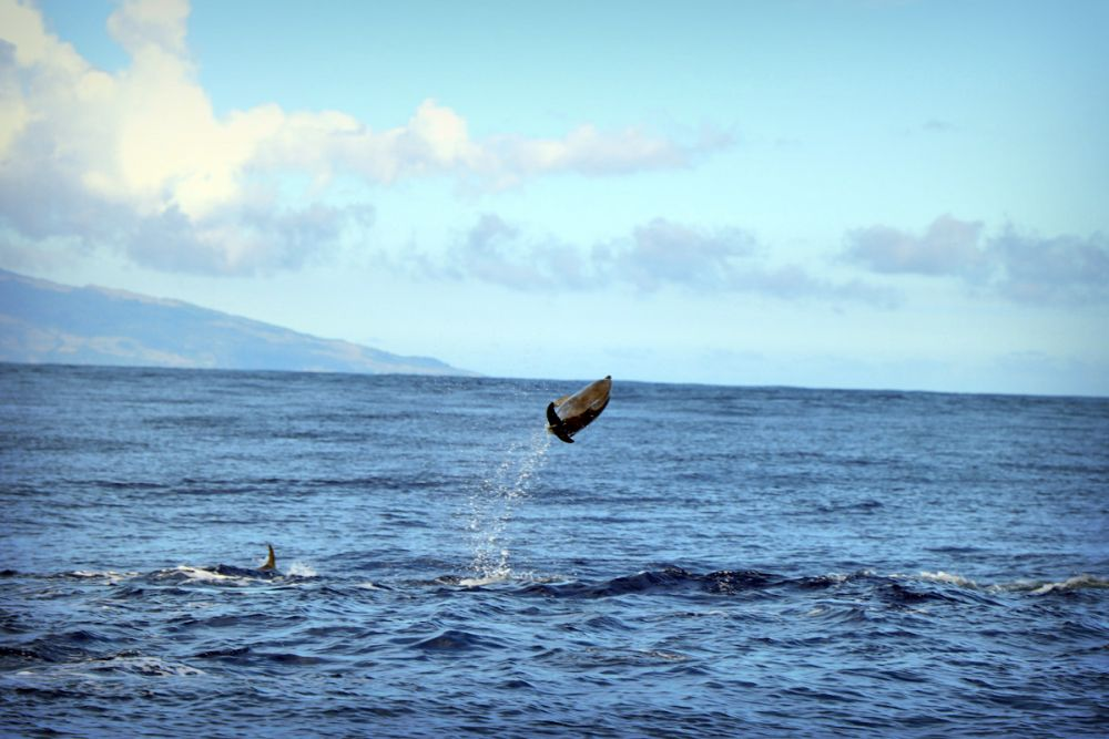 Photo voyage Açores 17