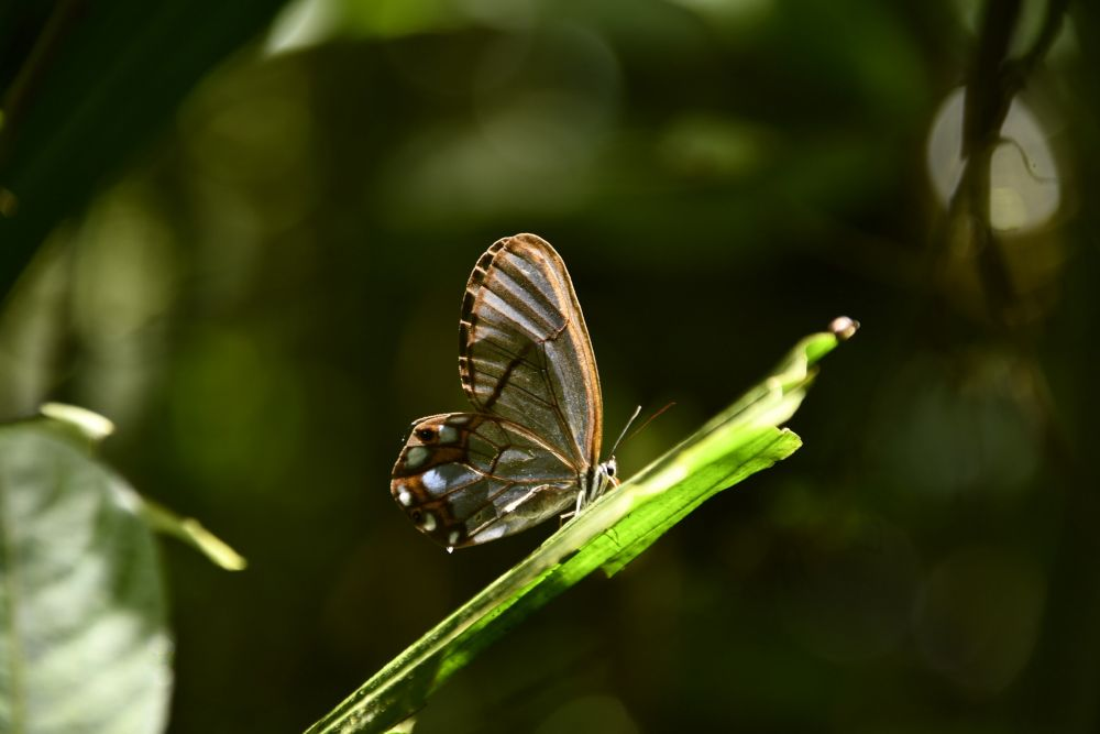 Papillon © Céline Di Nota
