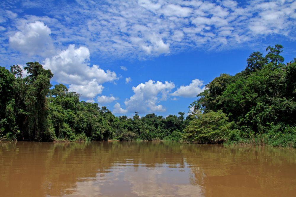 Forêt riveraine, Equateur © Manatee Amazon Explorer