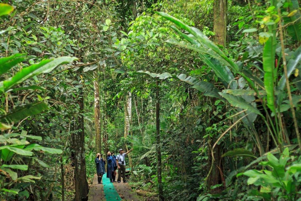 Excursion en forêt Amazonienne © Manatee Amazon Explorer