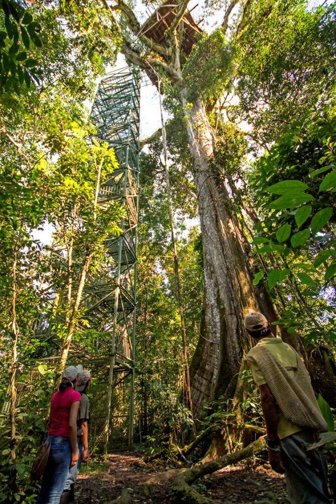 Tour d'obersation en forêt Amazonienne © Manatee Explorer