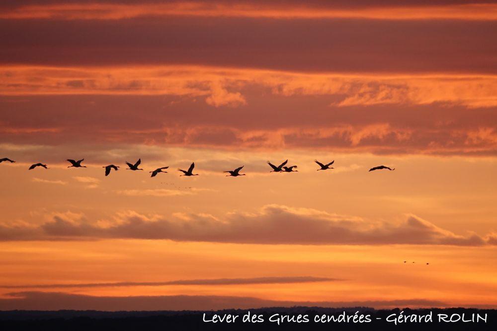 Lever des grues cendrées © Gérard Rolin