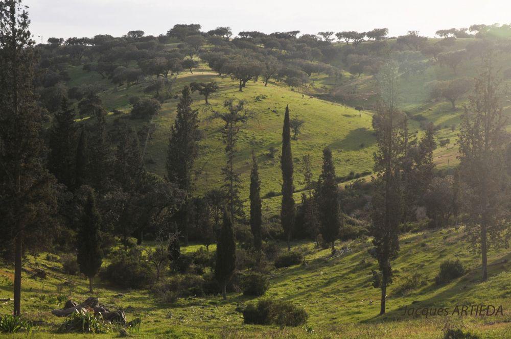 Paysage à l'entrée de Polo do Lobo dans le Parc Naturel du fleuve Guadiana © Jacques Artieda