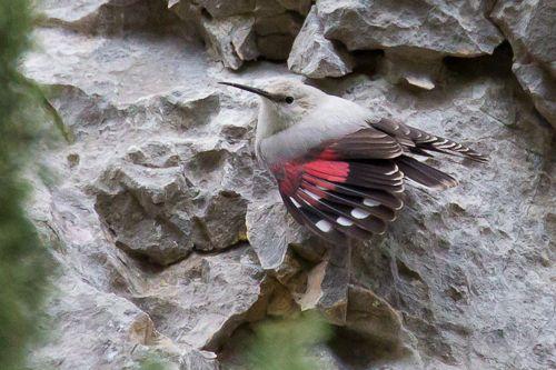 Séjour nature France - LPO Ornithologie initiation - Alpilles et Crau Hiver - Ticho - Philippe Boinon