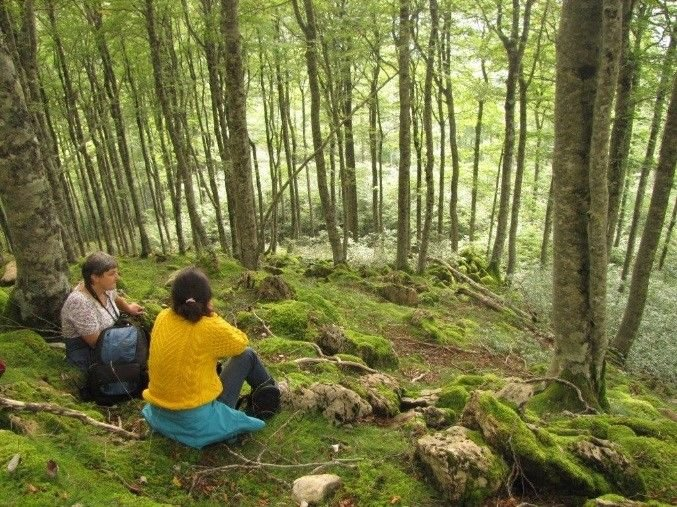 En quête du Pic à Dos Blanc dans les hêtraies - LPO Aquitaine