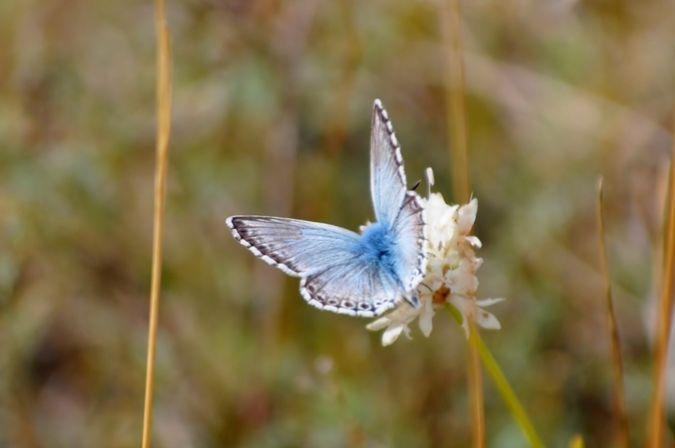 Bleu nacré espagnol © Thomas Marchal
