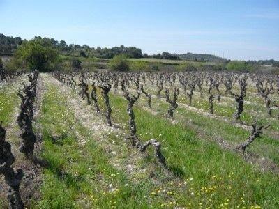 Cèpes de vigne © LPO Hérault
