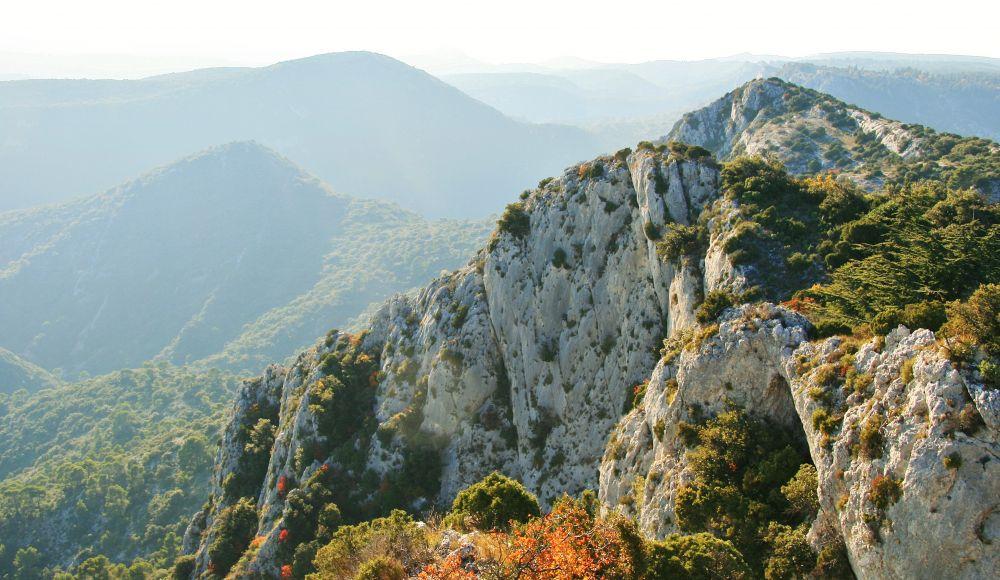Vue de la forêt des Cèdres à Bonnieux  © Jacki McLelland