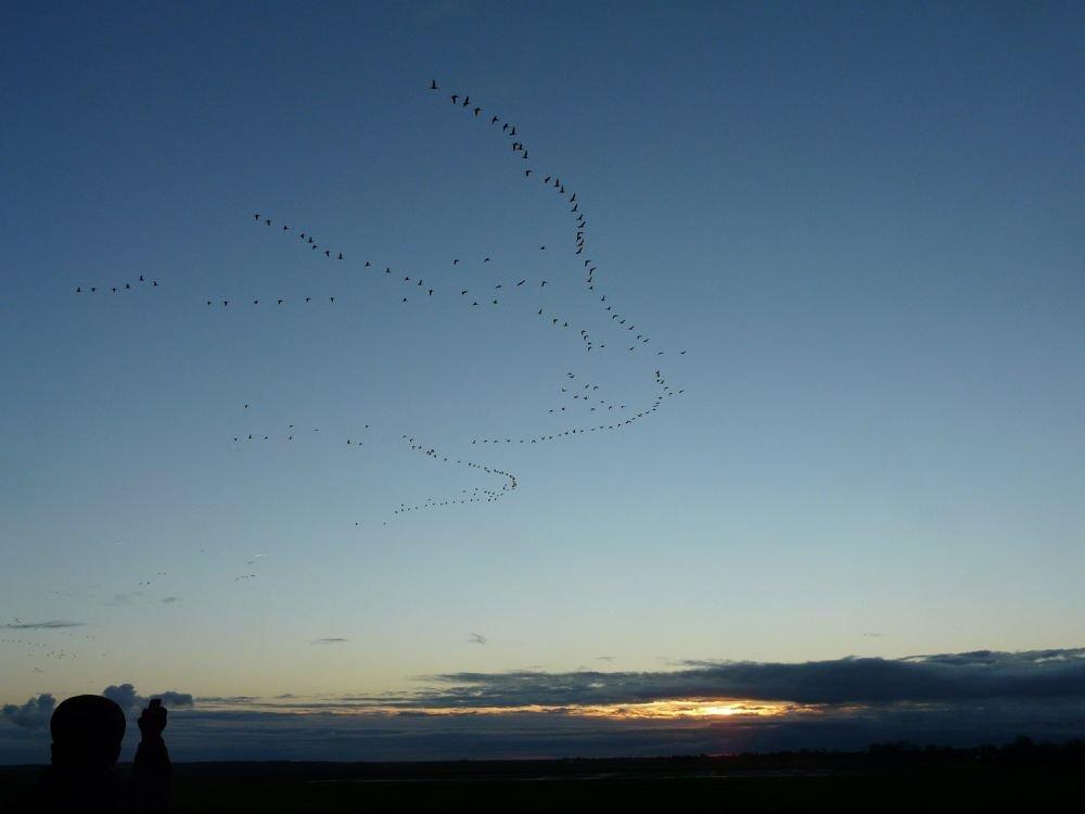 Envol d'oiseaux, Pays Bas © Jean Baptiste Martineau