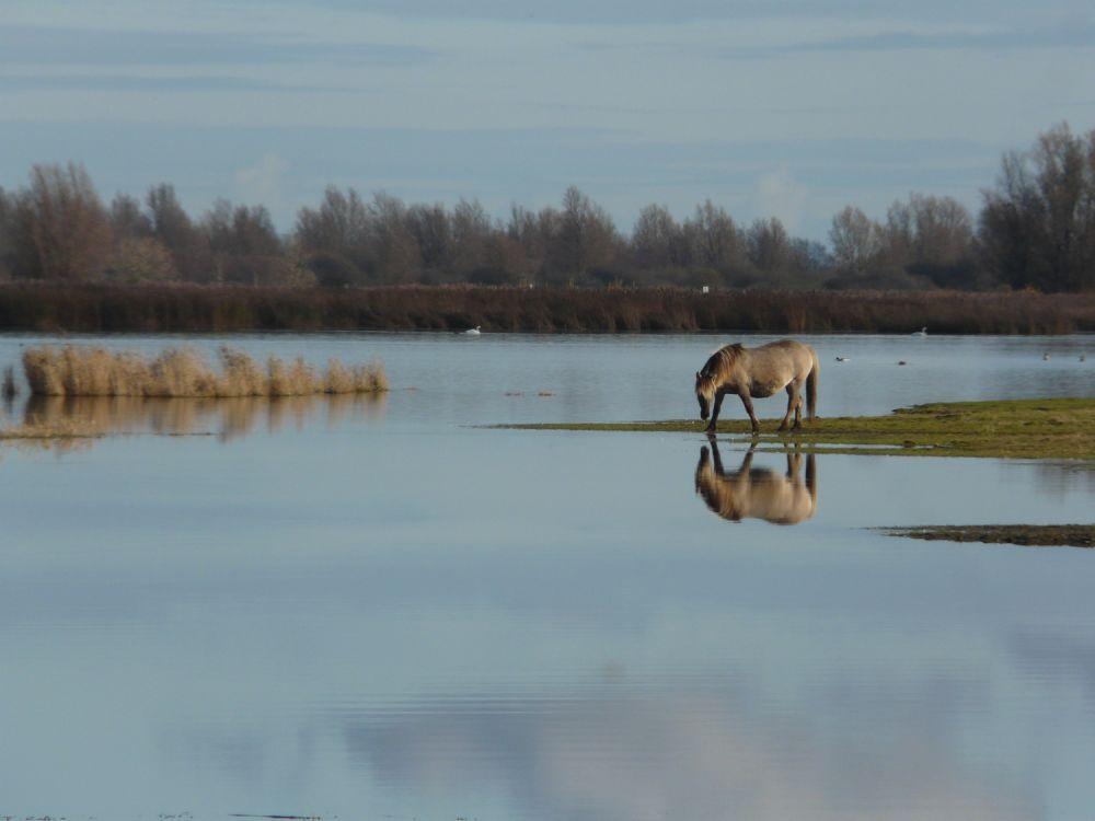 Pays Bas © Jean Baptiste Martineau
