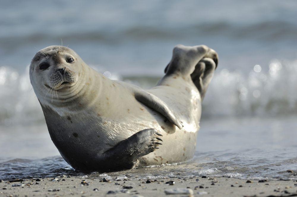 Phoque veau marin © Marketing Groningen