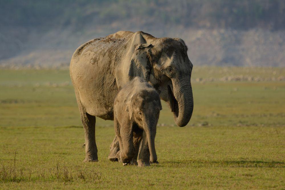 voyage-nature-inde-Dhikala-éléphant © Gérard David