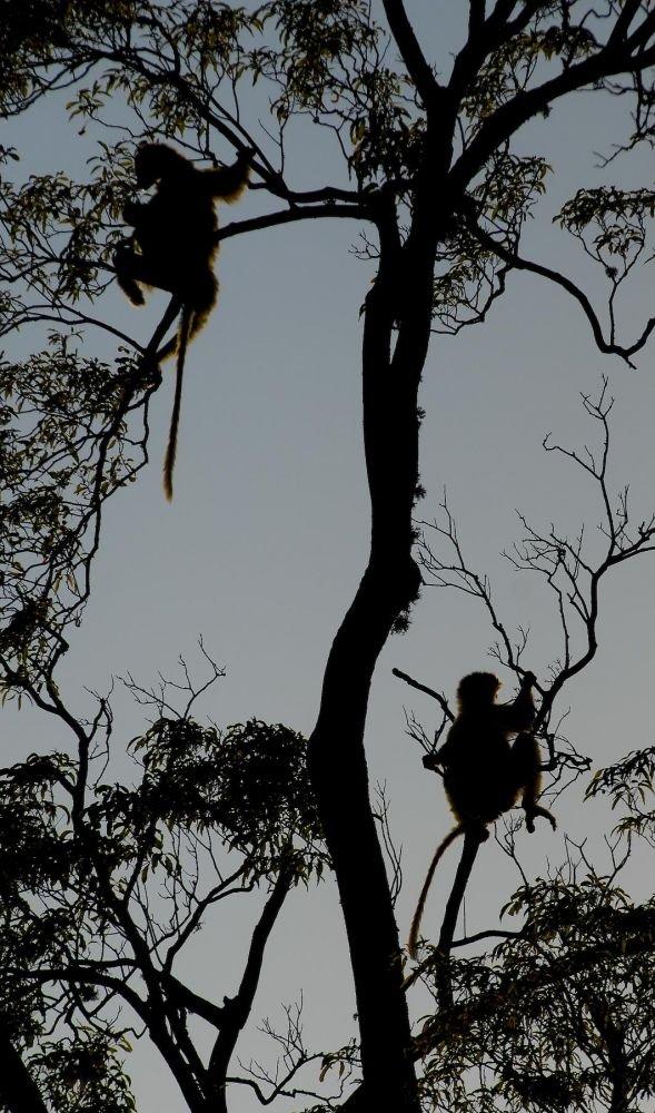 observation lemurien madagascar
