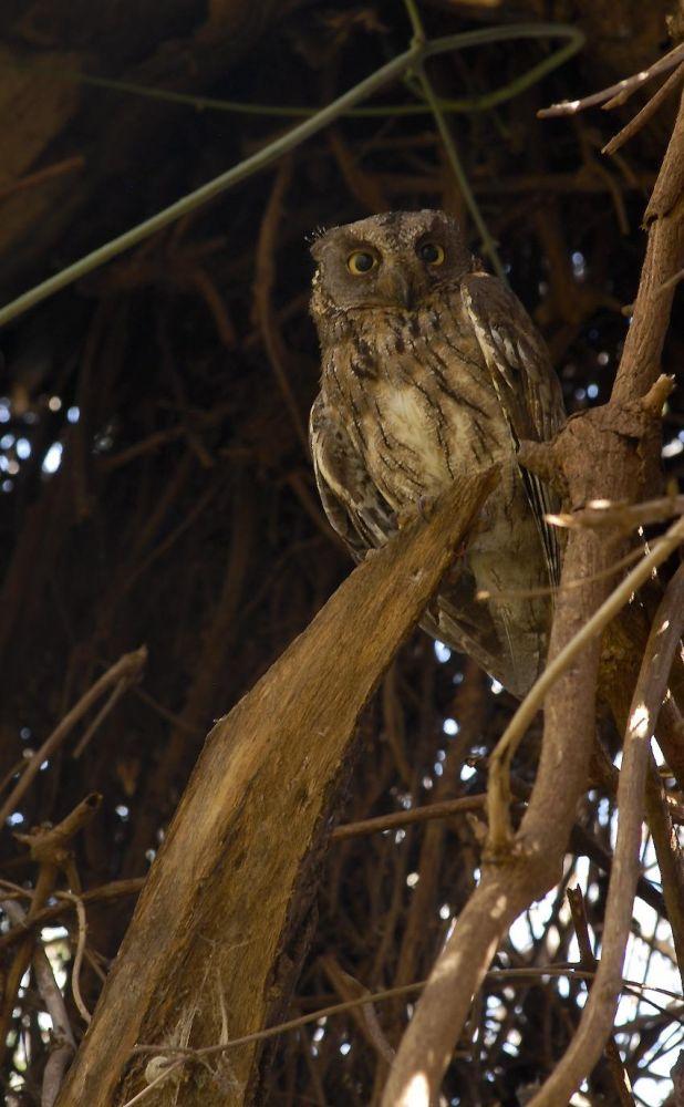 voyage ornithologique madagascar