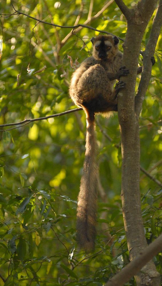 voyage photo lemurien