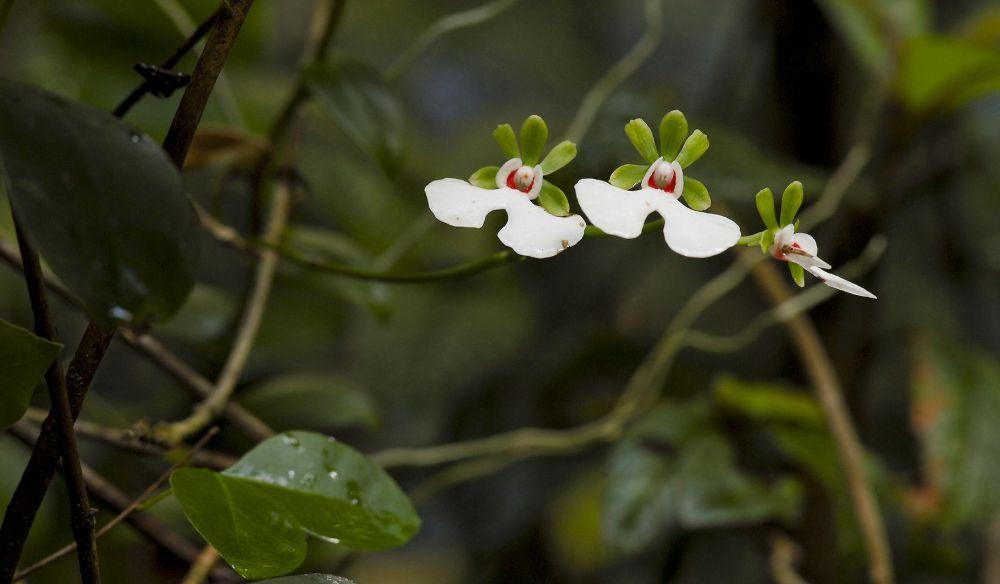 flore madagascar