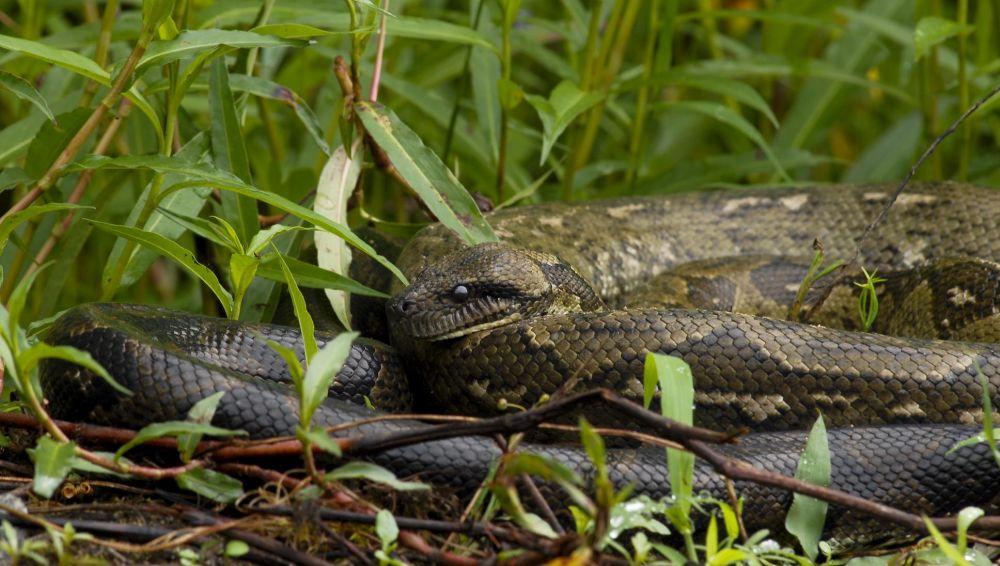 serpents madagascar