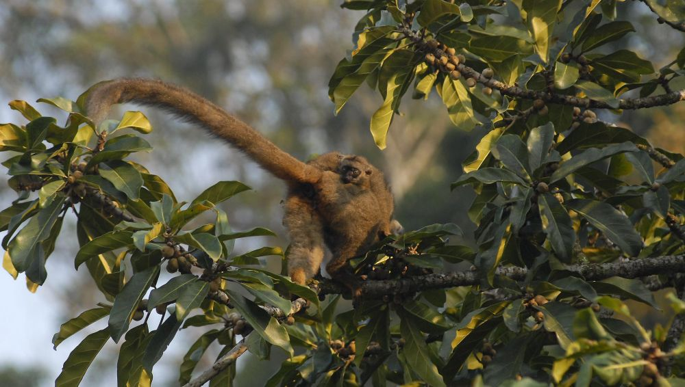 voyage nature lemurien madagascar