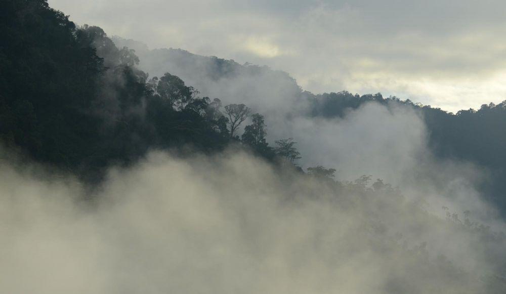 voyage foret tropicale madagascar