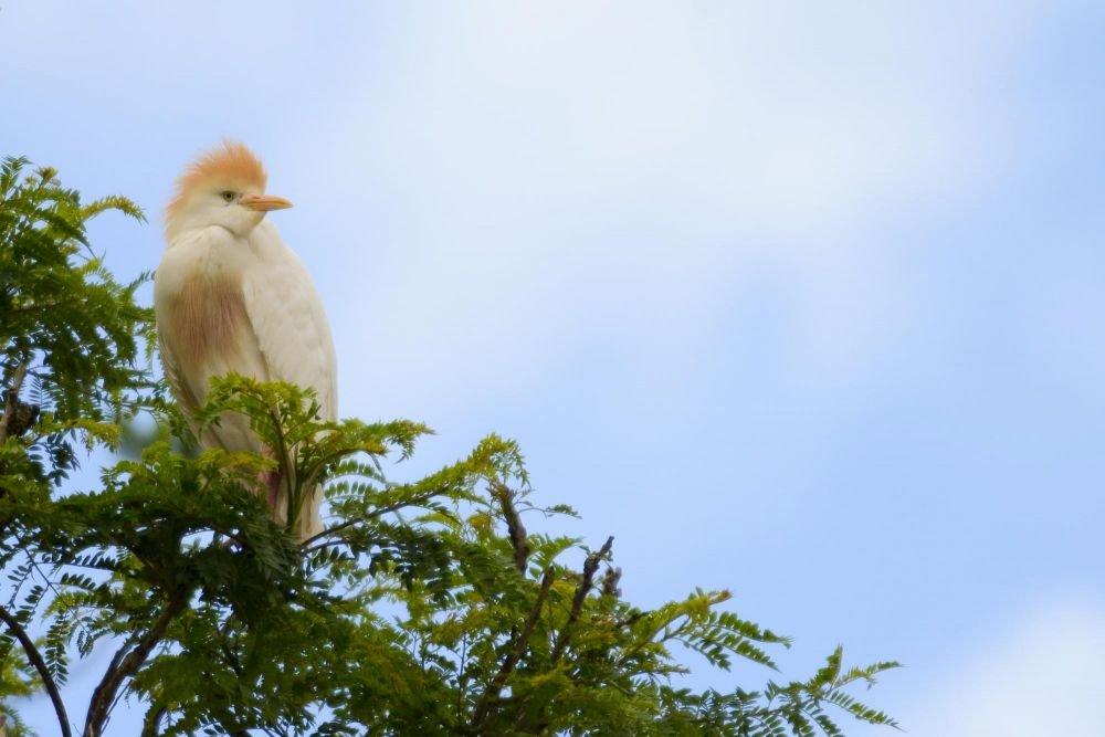 voyage observation oiseaux madagascar