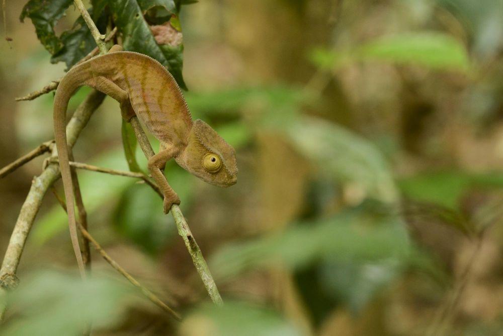 nature endemique madagascar