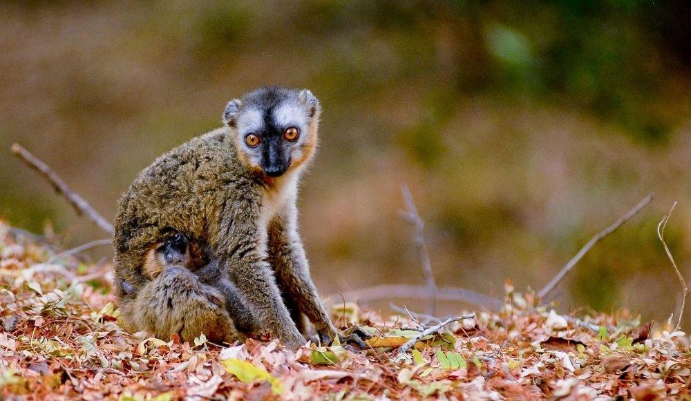 Photo voyage Madagascar 1