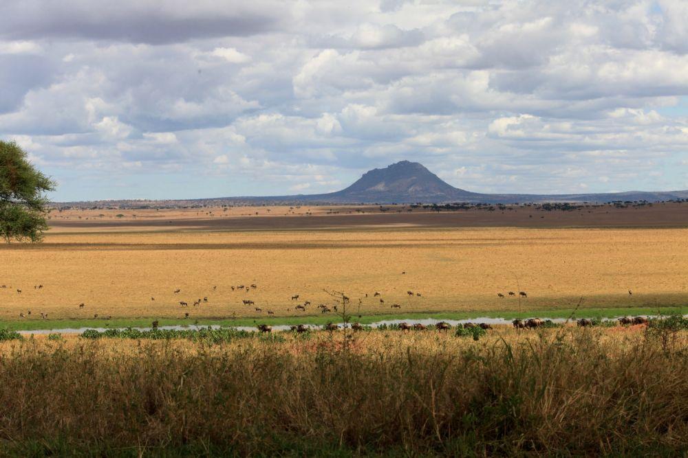 Zébres et Gnous zone marécages - Serengeti