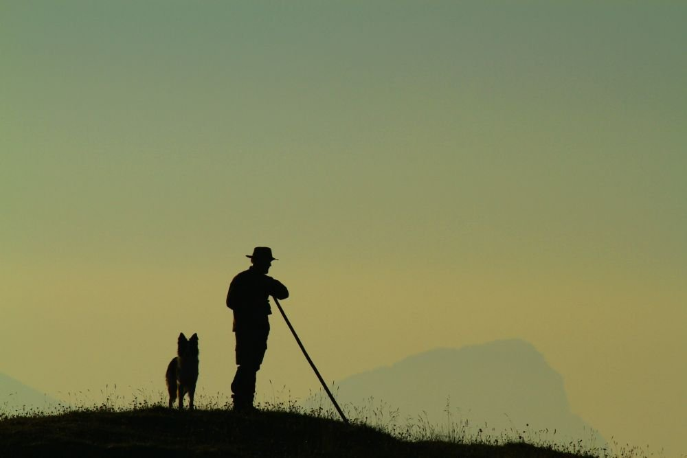 Le berger et son chien fidèle dans les Alpes