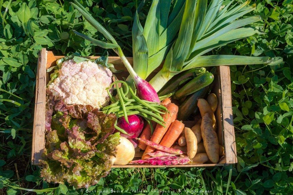 Panier de légumes Bio de la vallée du Champsaur - Haues-Alpes
