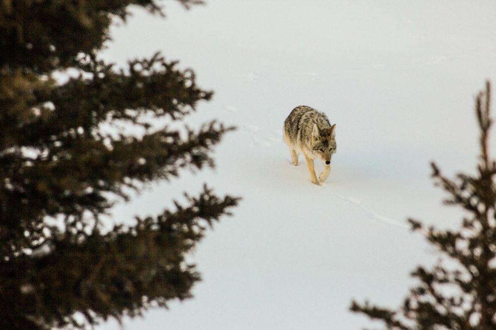 Photo voyage Yellowstone 16