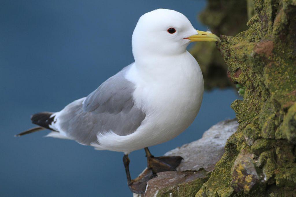 Le fief des oiseaux de mer