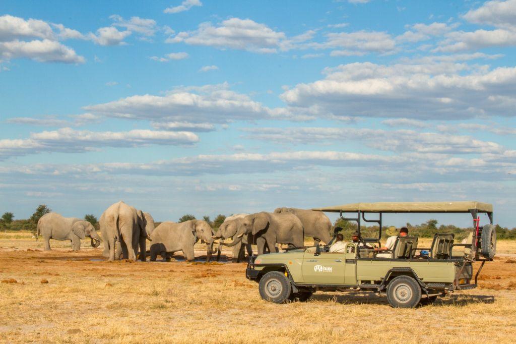 Game drive safari elephant