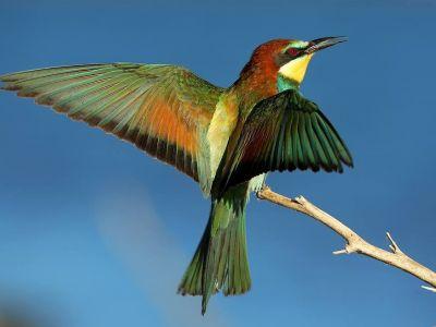 Couleurs et diversité des oiseaux Méditerranéens