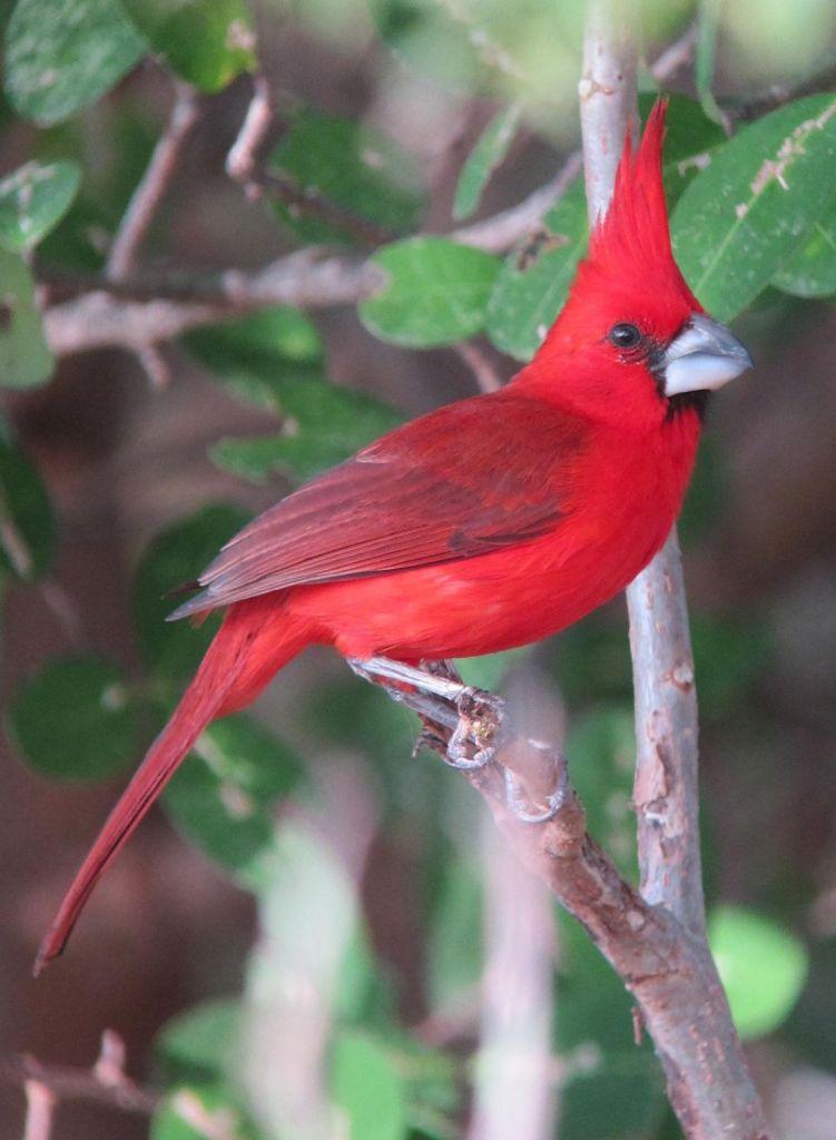 Voyage ornithologique  dans les Andes Colombiennes