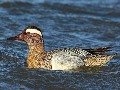 Séjour formation : Oiseaux d'eau et du littoral - initiation