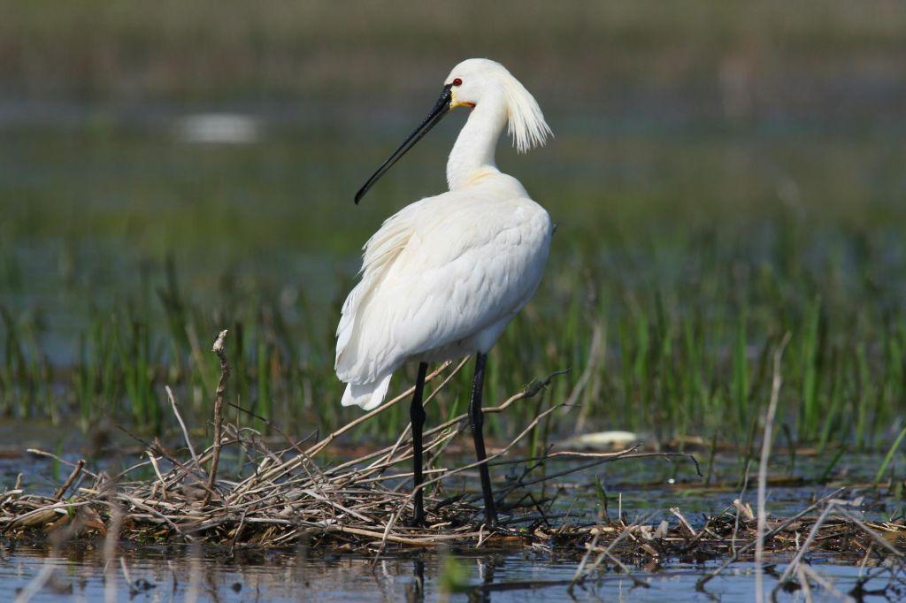Andalousie, un monde d'oiseaux