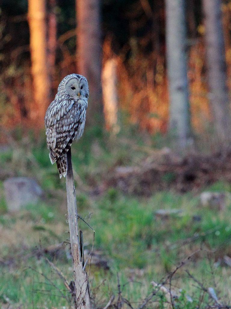 Ornithologie sur les rives de la Baltique