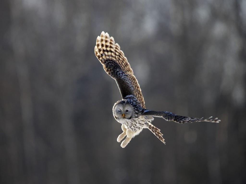 Ornithologie en Estonie