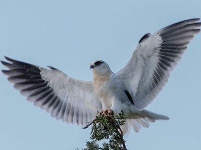 Ornithologie du Tage à l'Alentejo