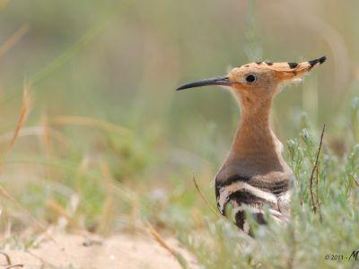 Trésors ornithologiques du Mont Ventoux à la Camargue