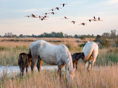 Camargue : au carrefour des oiseaux migrateurs